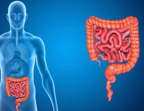 Scopri a quali orari corrispondono determinati organi