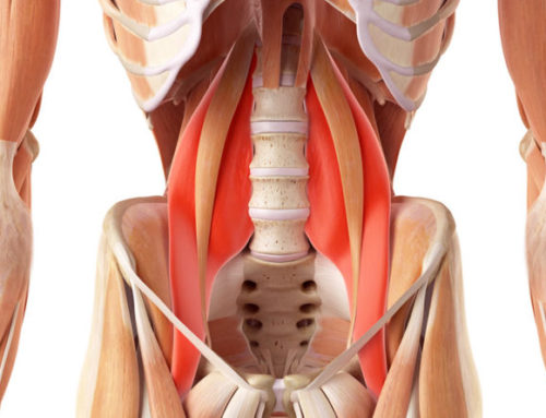 Mal di schiena: quali sono i muscoli che lo causano